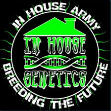 In House Genetics Logo for feminized