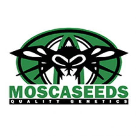 Mosca Seeds Quality Genetics logo