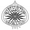 hi-elevation genetics logo shapeshifter breeder