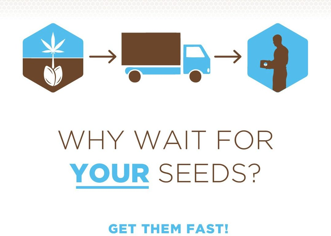 Fast shipping cannabis seeds