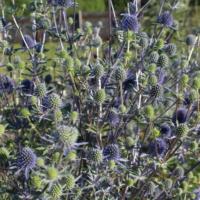 mega pollinators seeds