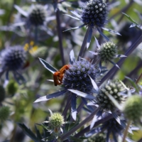 pollinators galore plant seeds