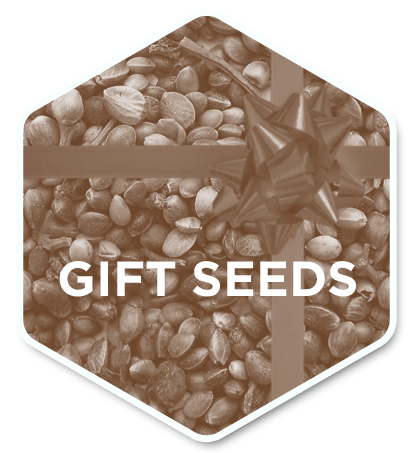 Gift Seeds 1