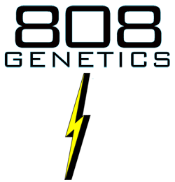 808 Genetics Hawaiian based cannabis seed brand logo