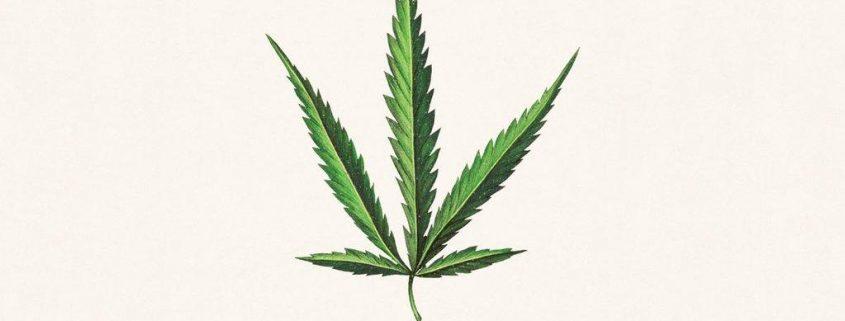 ruderalis leaf logo