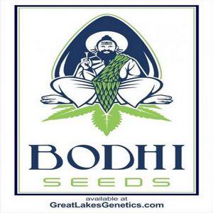 buy bodhi cannabis seeds