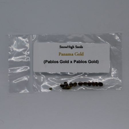 Snow High marijuana seeds Panama Gold Pablos Gold