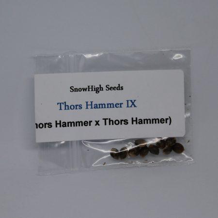 Thors Hammer IX seeds by Snow cannabis seed brand