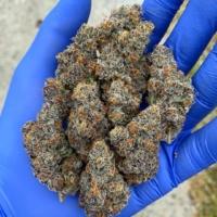 exotic genetix colonel crunch seeds