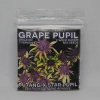 grape pupil marijauna seeds mass medical strains