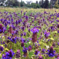 self-heal field