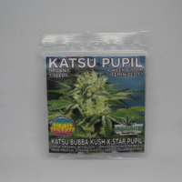 Katsu Pupil seeds Mass Medical Strains