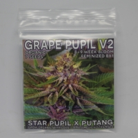 grape pupil v2 cannabis seeds mass medical strains