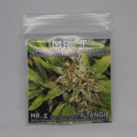 Mr T Gift free cannabis Seeds mass medical strains