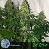 fat wreck cannabis seeds