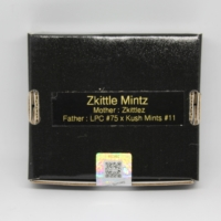 Zkittle Mints cannabis seeds from 808 Genetics