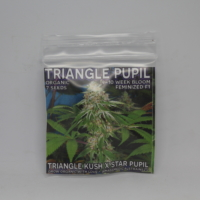 triangle pupil cannabis seeds mass medical strains