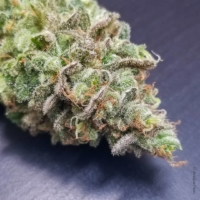 deadpanhead dr skunk marijuana seeds