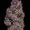 pinkleberry dried pink buds