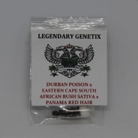 durban poison south african sativa panama red hair marijuana seeds