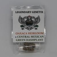 oaxaca heirloom central mexican green hashplant marijuana seeds