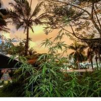 wailing valley cannabis plant in hawaii