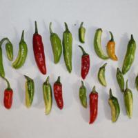 fish pepper asssortment