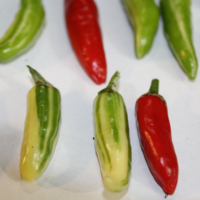 fish pepper seeds