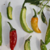 fish peppers variegation