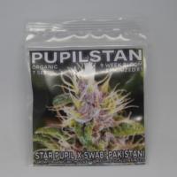 PupilStan feminized marijuana seeds from mass medical strains