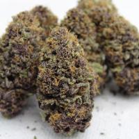 strawberry mamba x purple pineapple express seeds