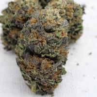 deep impact cannabis seeds