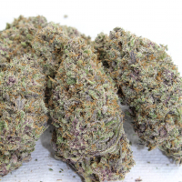 scentuous dried cannabis buds