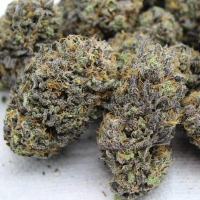 dream come true fem marijuana seeds